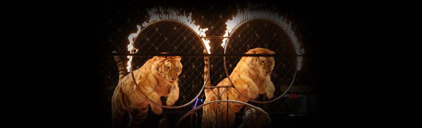 Alzafar Shrine Circus
